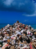 A Pile of Conch Shells, Cat Island, Bahamas Photographic Print by Greg Johnston