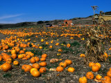 Pumpkin Patch Beside Highway 1, San Mateo County, USA Photographic Print by John Elk III