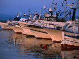 Fishing Boats in Porto Calasetta, Sant' Antioco, Sardinia, Italy Photographic Print by Dallas Stribley