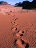 Tracks Across the Dunes of Wadi Rum, Wadi Rum National Reserve, Aqaba, Jordan Photographic Print by John Elk III
