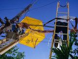 Men Repairing Telephone Lines, Havana, Cuba Photographic Print by Rick Gerharter