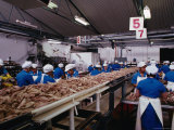 People Working in Fish Processing Plant, Japan Photographic Print by John Hay