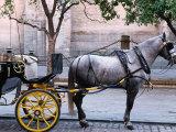 Horse and Carriage, Sevilla, Spain Photographic Print by John Banagan