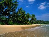 Palm Trees on Mirassa Beach, Weligama, Sri Lanka Photographic Print by Anders Blomqvist