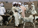 People and Goats at Animal Market, Omdurman, Khartoum, Sudan Photographic Print by Eric Wheater