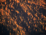 Aerial View of Forest at Dusk, New York, USA Photographic Print by Angus Oborn