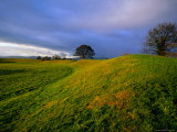 Giant's Ring Dates from 4000 BC, Ballynahatty, United Kingdom Photographic Print by Oliver Strewe