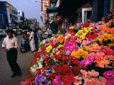 Artificial Flower Seller at Pettah Bazaar, Colombo, Sri Lanka Photographic Print by Anders Blomqvist