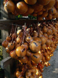 Hollow Gourds Hanging at Shrine, Tokyo, Japan Photographic Print by Martin Moos