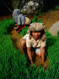 Rice Paddy Farmers., Tana Toraja, South Sulawesi, Indonesia Photographic Print by Greg Elms