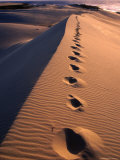 Footprints on Sand Dune at Cape Howe, Croajingolong National Park, Victoria, Australia Photographic Print by Grant Dixon