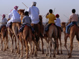 Early Morning Training for Camel Racing, Dubai, United Arab Emirates Photographic Print by Phil Weymouth
