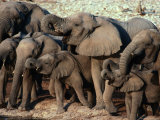 A Herd of Drinking Elephants - Etosha National Park, Namibia, Etosha National Park, Namibia Photographie par Dennis Jones
