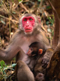Monkey with Baby in Bamboo Grove, Cape Toi-Misaki, Japan Photographic Print by Martin Moos