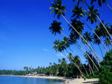 Bending Palm Trees on Unawatuna Beach, Unawatuna, Southern, Sri Lanka Photographic Print by Greg Elms