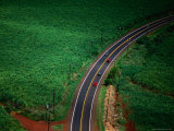 Aerial View of Cane Field and Highway, USA Fotografie-Druck von Peter Hendrie