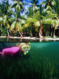 Woman Snorkelling, Micronesia Photographic Print by Casey Mahaney
