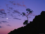 Section of Larapinta Trail Silhouetted in Evening, West Macdonnell National Park, Australia Photographic Print by Paul Sinclair
