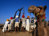 Camel and Men Working on Camel Cart, Pushkar, Rajasthan, India Photographic Print by Dallas Stribley
