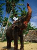 Man Riding Elephant, Hikkaduwa, Sri Lanka Photographic Print by Dallas Stribley