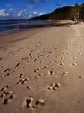 Footsteps on the Beach at Kingfisher Bay, Kingfisher Bay,Fraser Island, Queensland, Australia Photographic Print by Richard I'Anson