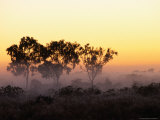 Trees at Sunrise, Cape York Peninsula, Australia Photographic Print by Oliver Strewe
