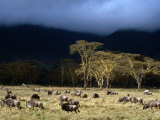 Low Cloud Hangs Over Zebra and Wildebeest at Ngorongoro Crater, Arusha, Tanzania Photographic Print by Ariadne Van Zandbergen