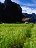 Stilted House Surrounded by Limestone Cliffs and Fields, Vang Vieng, Laos Photographic Print by Ryan Fox