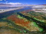 Thermal Hot Springs' Run-Off on Altiplano, Lake Verde, Bolivia Fotografiskt tryck av Brent Winebrenner