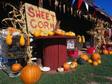 Roadside Stall Selling Sweet Corn and Pumpkin, Forestburg, USA Photographic Print by Rick Gerharter