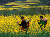 Female Farmers Walking Through Canola Fields, Kaili, China Photographic Print by Keren Su