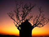 Tree in Sunset Silhouette, Hampi, Karnataka, India Photographic Print by Mark Daffey