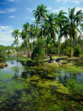 Village and Lagoon, Marang, Terengganu, Malaysia Photographic Print by Richard I&#39;Anson