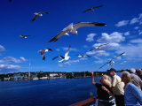Ferry Passengers Feeding Seagulls, Stockholm, Sweden Photographic Print by Wayne Walton