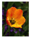 Beautiful Flower Giclée-Druck von Wilson Valentin