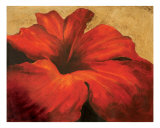 Red Hibiscus Giclee Print by Deborah Florence