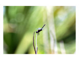 Dragonfly Photographic Print by Cb Roberts