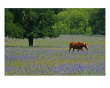 Horse In A Field Of Wildflowers Photographic Print by Paul Huchton