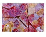 Autumn Color Leaves Under Ice Photographic Print by Ray Vaughn