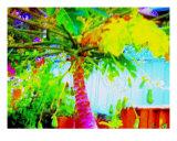 Fruitful Papaya Tree Photographic Print by Randi Bailey