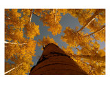 Aspen Sky Photographic Print by David Thompson