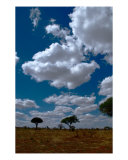 Everyday Serengeti Sky Photographic Print by M. Dang
