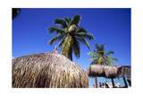 Palm Trees and Palapa Umbrellas Palm Beach Aruba Photographic Print by George Oze