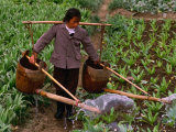 Woman Irrigating Crops, Guilin, China Photographic Print by Nicholas Pavloff