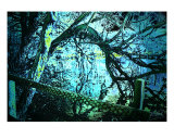 08173 Lainzer Tiergarten 05 Photographic Print by andreas kovar