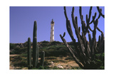 The California Lighthouse with Cactuses Aruba Photographic Print by George Oze