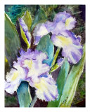 Irises Photographic Print by Saga Sabin