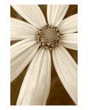 Pinwheel Photographic Print by Teresa Stallone