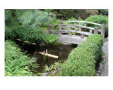 Japanese Garden Bridge Photographic Print by William Luo