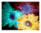 Flower Power Photographic Print by Florene Welebny